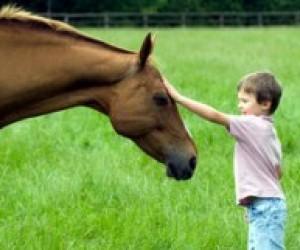 На уроці здоров'я чернівецькі школярі зможуть покататися на конях