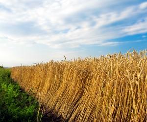 Гранти на навчання в аграрних вузах України