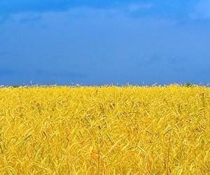 Завершено проведення ЗНО з історії України