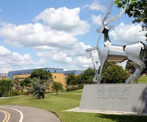 Підготовчі програми University of Surrey