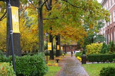 Стипендія від американського Adelphi University